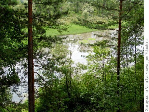 Старица реки Бии, затопляемая в половодье.