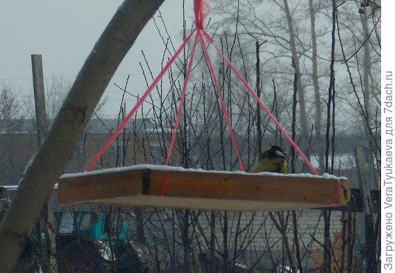 Синички прилетели на излете осени, фотография с блога моего внука Миши Тюкаева http://tmisha.jimdo.com