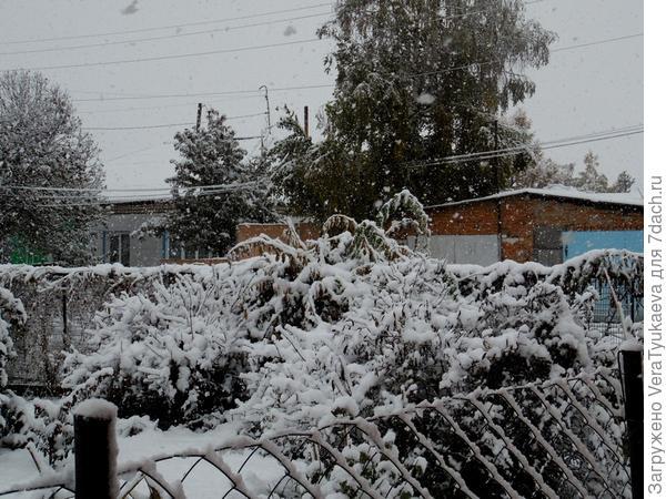 Все в снегу.