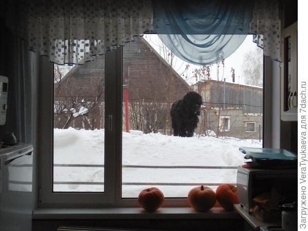 Каштак неподалеку от кухонного окна.