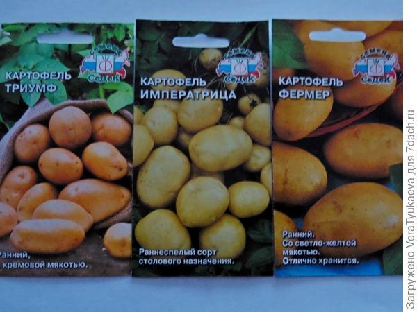 Пакетики с семенами картофеля разных сортов.