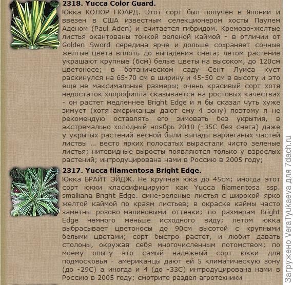 Скриншот странички сайта www.moisad.net  Это описание юкк, которые растут в Подмосковье с 2005 года.