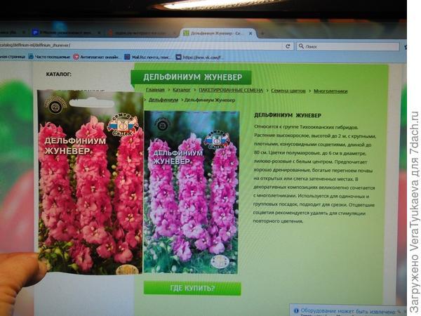 Пытаюсь сравнить Жуневер (мой пакетик) и его фотографию с сайта продавца