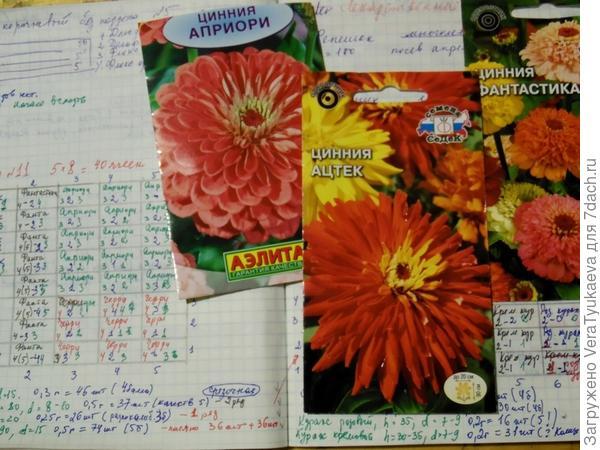 Записи в тетради и пакетики с семенами цинний. О плохих ростках есть записи, 4б - четыре слабых растения