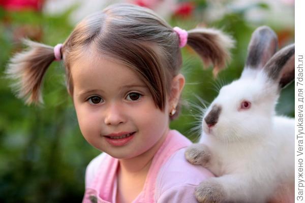 Красивый кролик. У нас был такой же. Фото с сайта pixabay.com