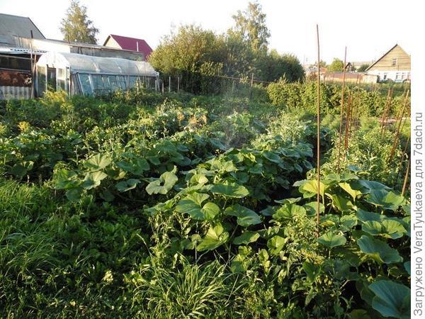 Это фотография моего участка, огородные грядки. Фотография из статьи https://7dach.ru/VeraTyukaeva/ekskursiya-po-uchastku-ot-idei-do-modeli-30104.html