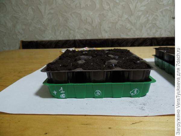 Семена петунии Татьяна будут посеяны в зеленую новую мини-кассету под номером 1.