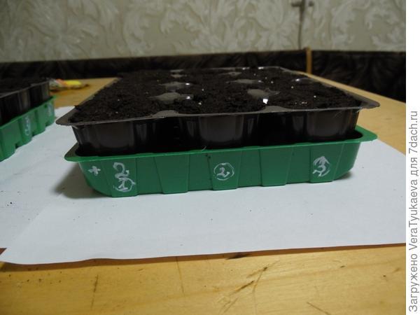 В таких двух кассетах в выделенных желтым цветом ячейках посеяны гранулки с семенами Елены Прекрасной.