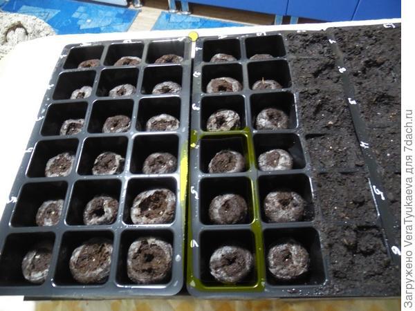 На большом поддоне в мини-кассете 2 желтым выделены три ячейки, в которые посеяны семена Василисы Премудрой.