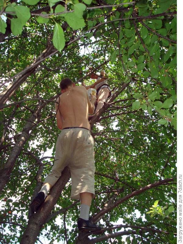 На любимом дереве