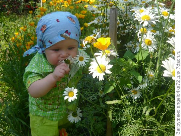 сыночек в бабушкином цветочном саду))