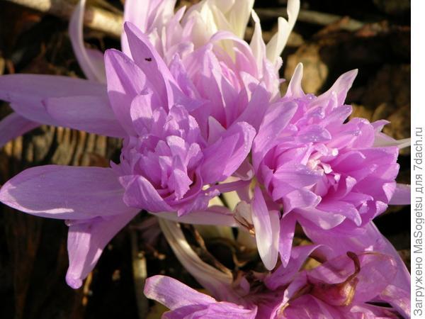 Еще одна красивая фотография этого цветка