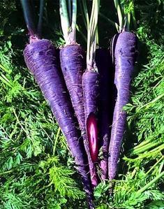 Фиолетовая морковь - это не миф.