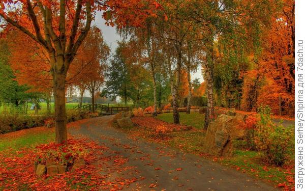 Газоны под опавшими листьями