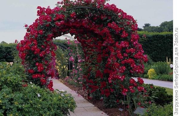 Арки, обвитые розами.