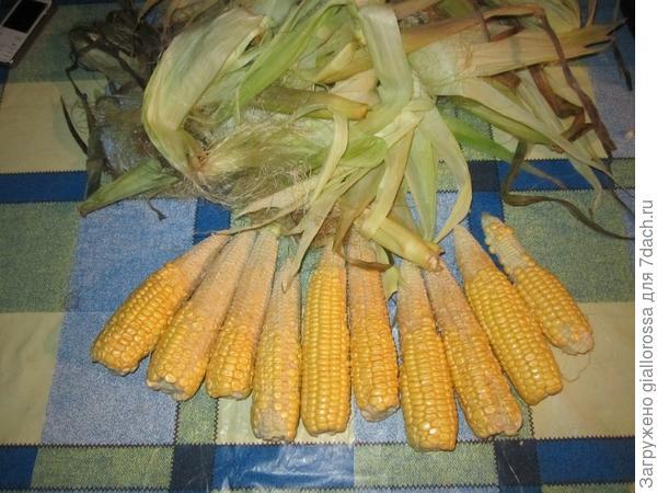 Недозревшая кукуруза