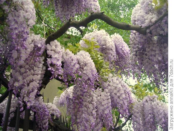 Бордюрные цветы цветущие фото