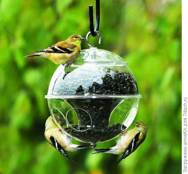 Необычные кормушки для птиц!