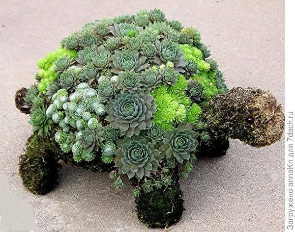 Клумба черепаха