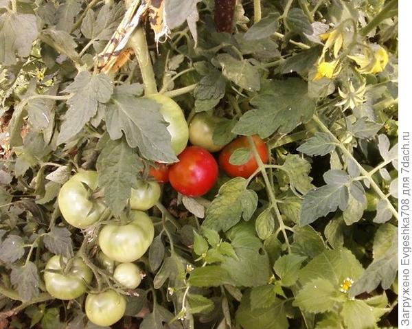 Как собрать отличный урожай? Инструкции к применению))))