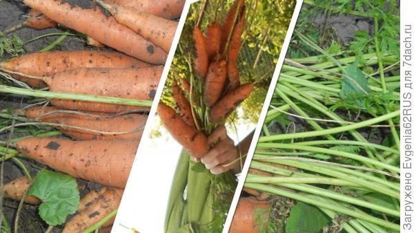 морковный букет