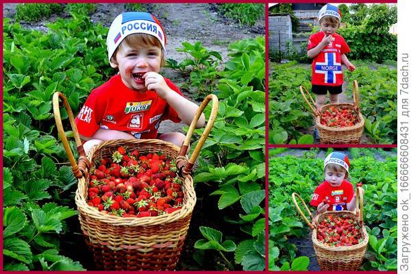 Королева ягод!!!Жаль что эта ягодка так быстро сходит!!!