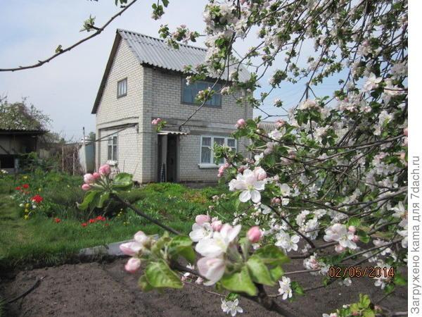 Наш доме на фоне цветущей яблони