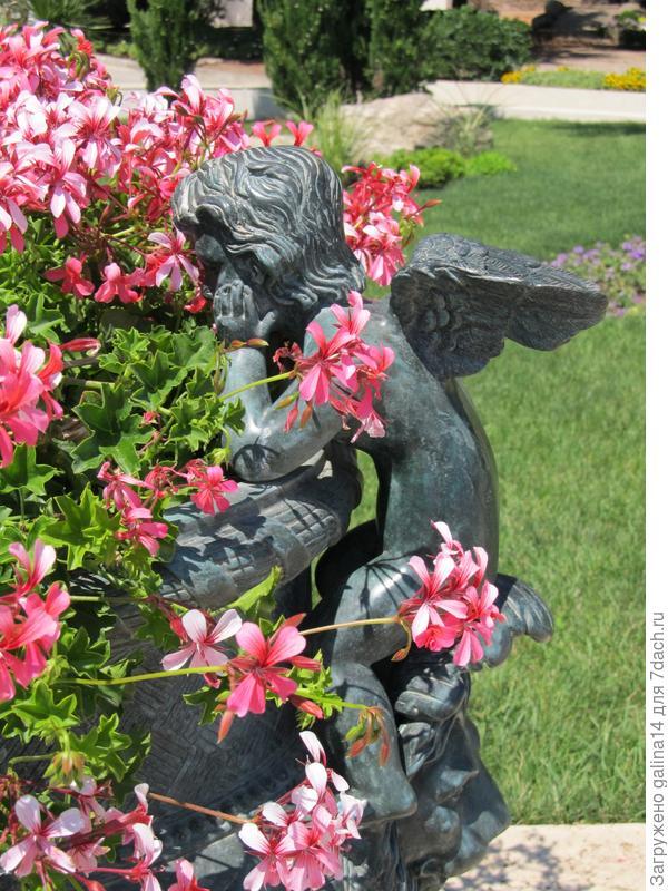 Ангелочек и пеларгония плющелистная