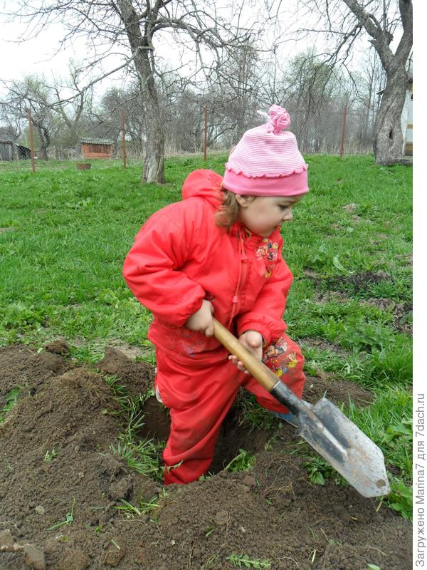 Катюша копает ямку.
