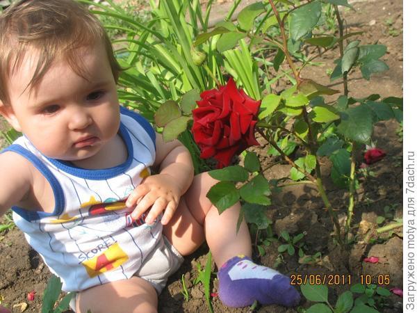 Мой внучек Матвеюшка.