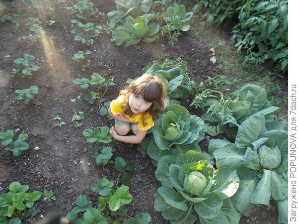 Милаша вырастила капусту!!!!!!!