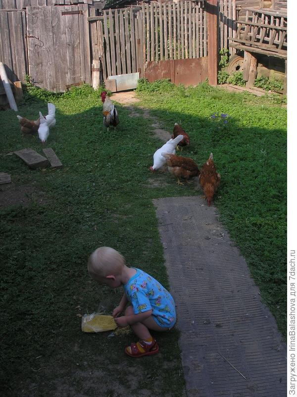 Лерочка кормит кур
