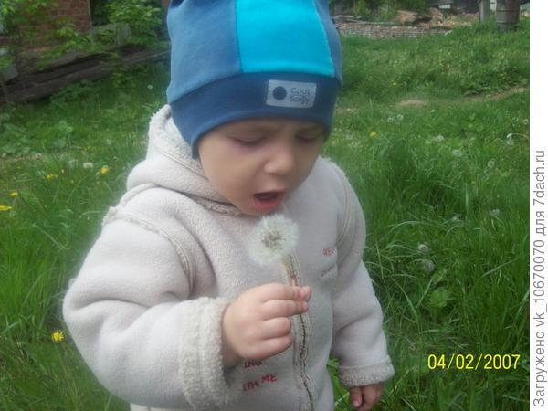 мальчик и одуванчик