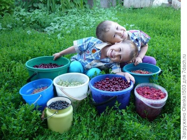 Максимка и Ромашечка собирали ягодки!