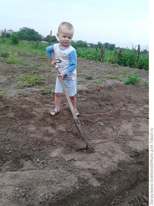 Даниил помагает бабушке сееть морковку!