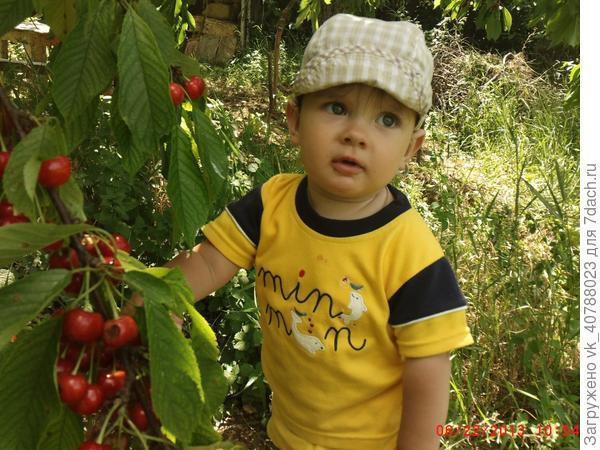 Любитель фруктов