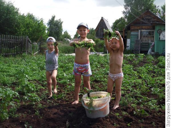 Прополка картошки