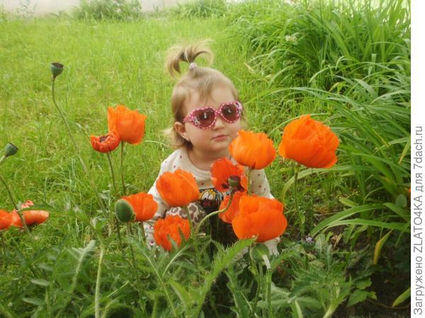 Посадила Златка с дедом маки))