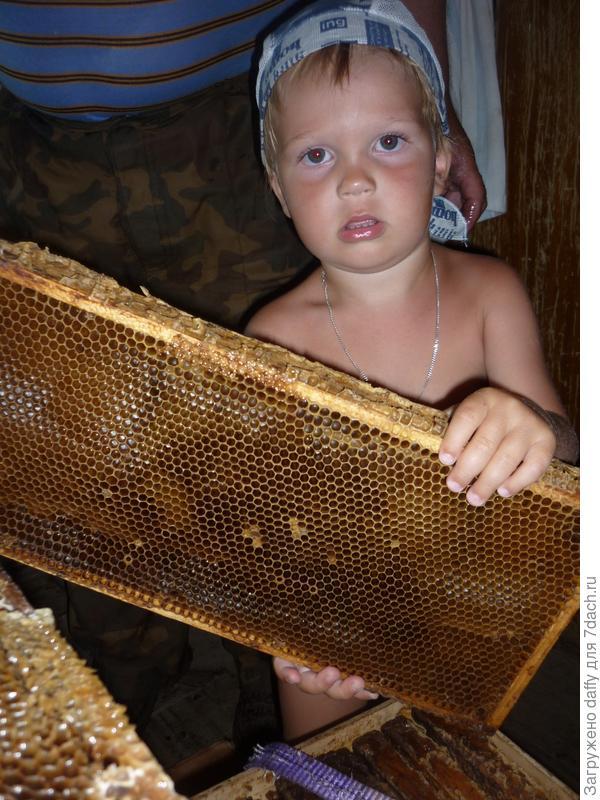 летом на даче мы качали мёд....