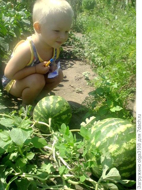 я ревизор огорода
