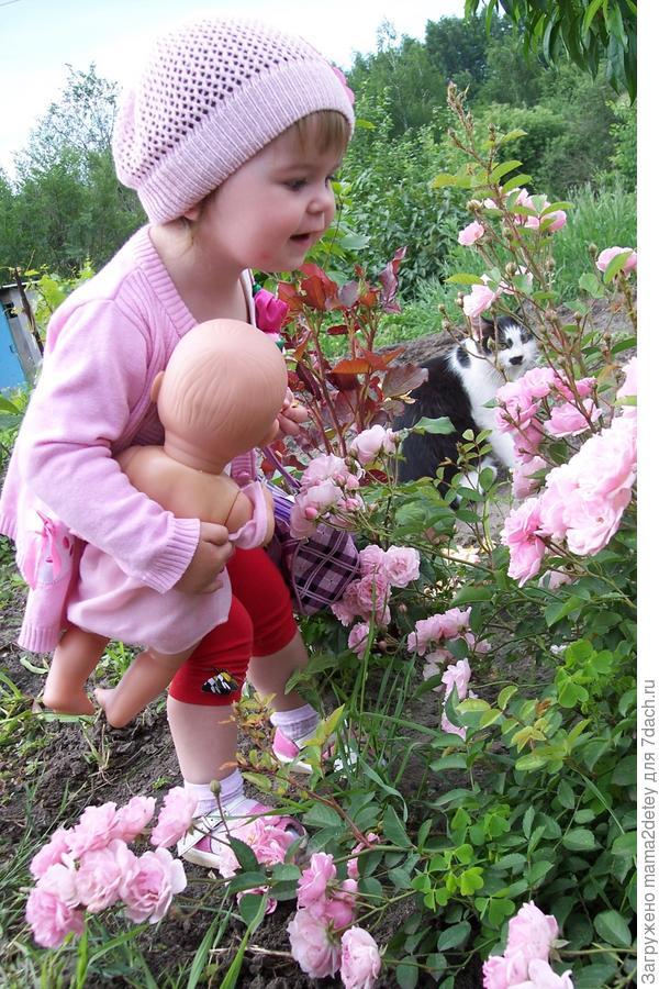 какие красиве цветочки тут