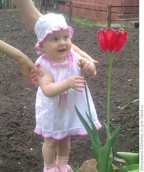 Ах, тюльпаны алые цветы!