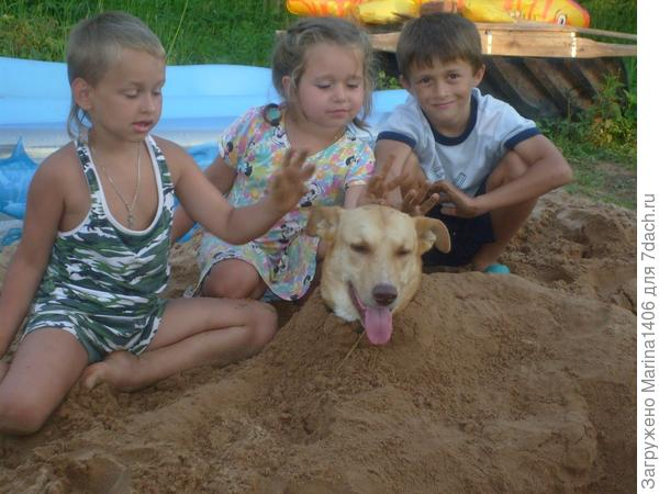 ОперацияСпасение собачки от жары