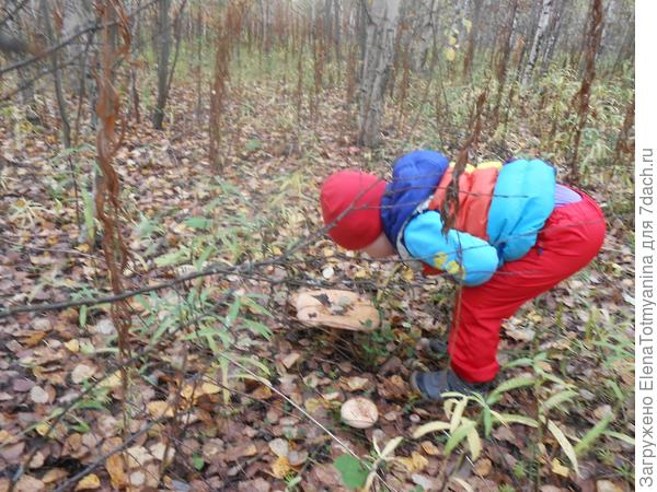 Раз,два,три,четыре,пять,  дедушка нас в лес вывел УРОЖАЙ собирать!!!