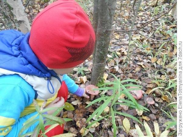 Раз, два, три, четыре, пять, дедушка нас в лес вывел, грибной УРОЖАЙ собирать!