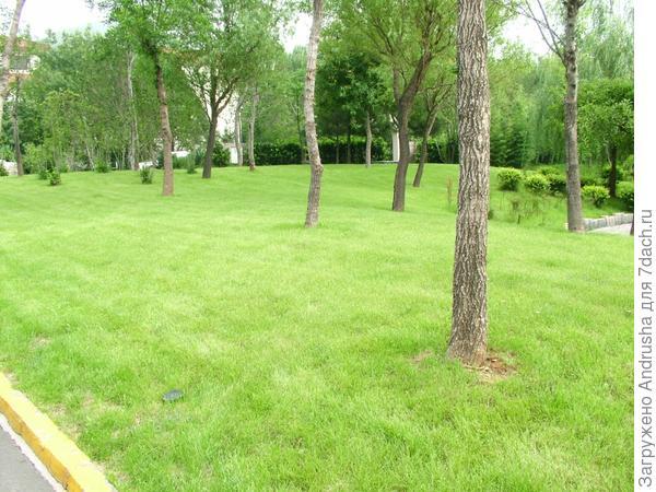 Большой газон в большом китайском саду