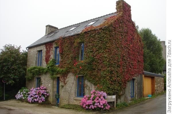 Дом в девичьем винограде