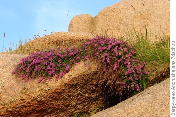 Скалы и растения Киберона