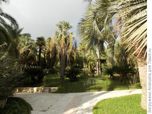 Пальмы Сочинского дендрария
