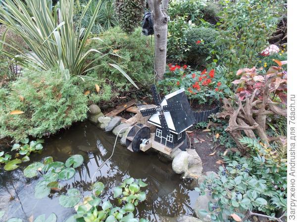 В водоеме «царствует» водный гиацинт
